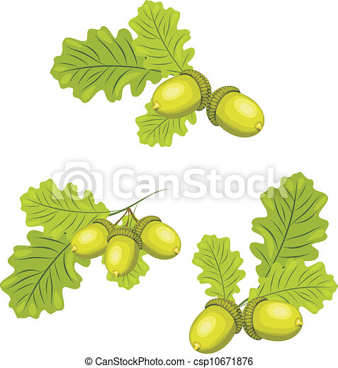 Oak branches with acorns - csp10671876