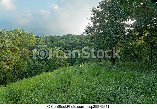 Oak Forest at Pine Bend Bluffs - csp38879541