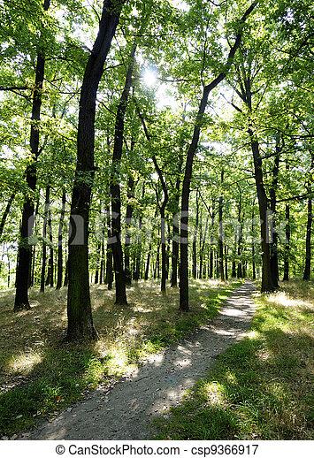 Oak forest in spring - csp9366917