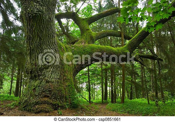oak., groot - csp0851661
