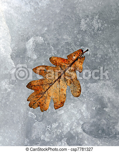 Oak leaf in snow - csp7781327