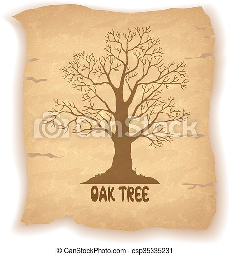 Oak Leafless Tree on Old Paper - csp35335231