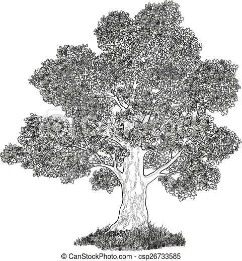 Oak tree and grass black contours - csp26733585