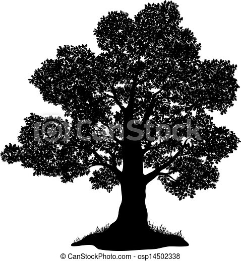 Oak tree and grass, silhouette - csp14502338