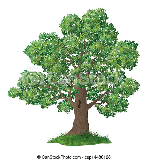 oak tree and green grass oak tree with leaves and green grass rh canstockphoto com oak tree clipart free oak tree clip art images