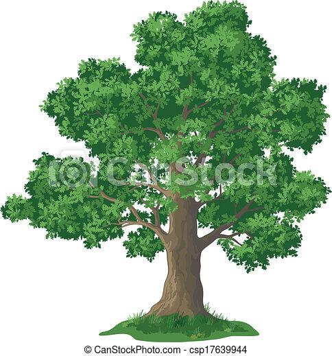 Oak tree and green grass - csp17639944