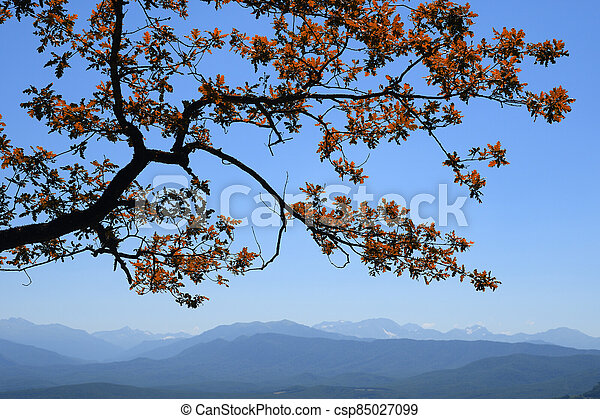 Oak tree branch with autumn red leaves on mountains and blue sky background - csp85027099