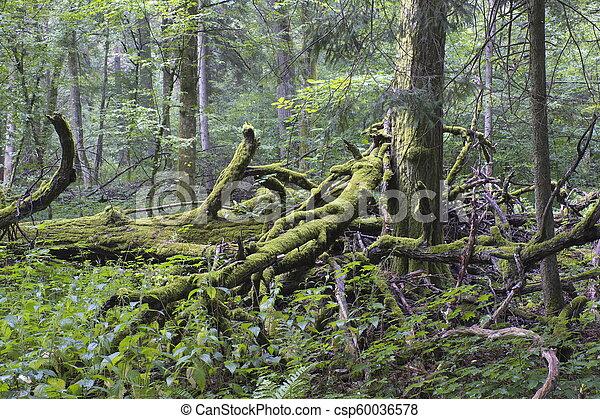 Oak tree broken branches lying - csp60036578