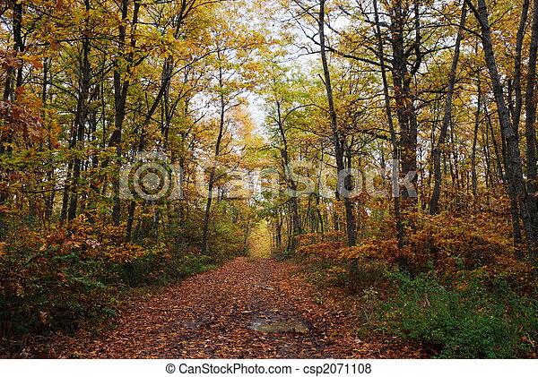 Oak tree forest - csp2071108