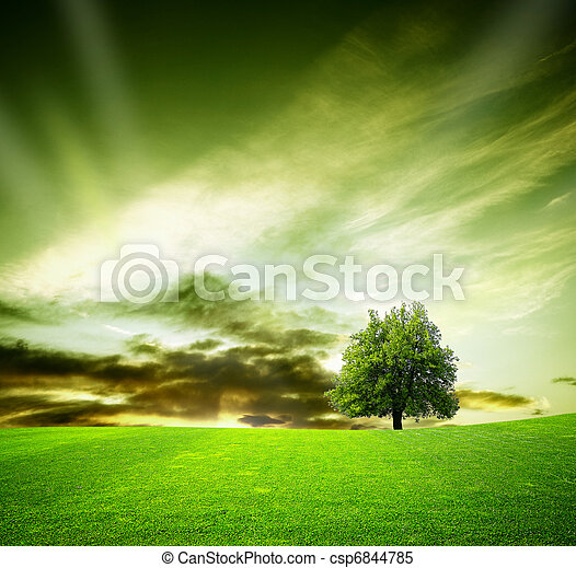 Oak tree in a field at sunset - csp6844785