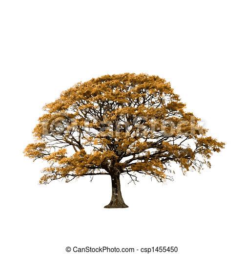 Oak Tree in Autumn Abstract - csp1455450