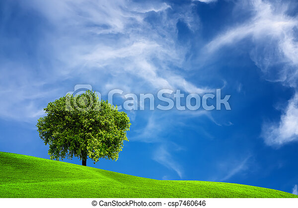 Oak tree in nature - csp7460646