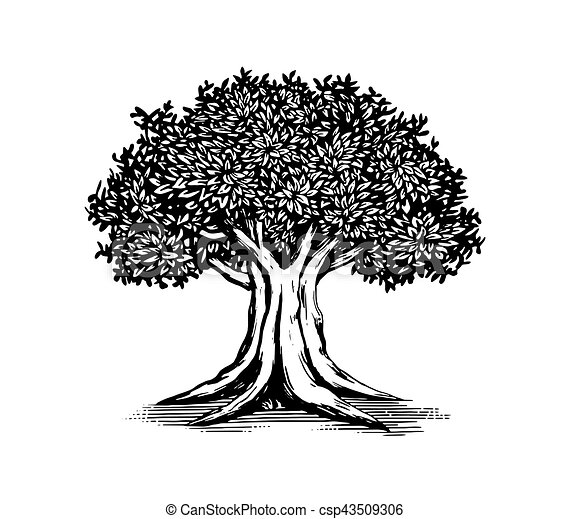 oak tree vector logo illustration design rh canstockphoto com oak tree victorian boots oak tree vector image