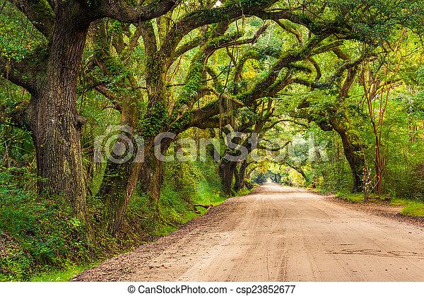 Oak trees along the dirt road to Botany Bay Plantation on Edisto - csp23852677