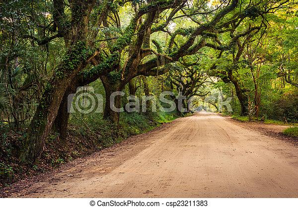 Oak trees along the dirt road to Botany Bay Plantation on Edisto - csp23211383