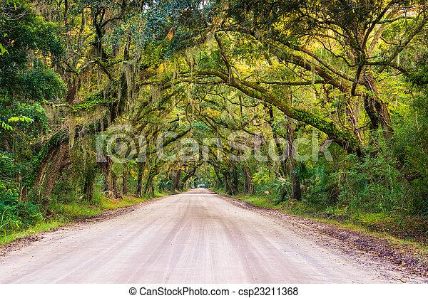 Oak trees along the dirt road to Botany Bay Plantation on Edisto - csp23211368