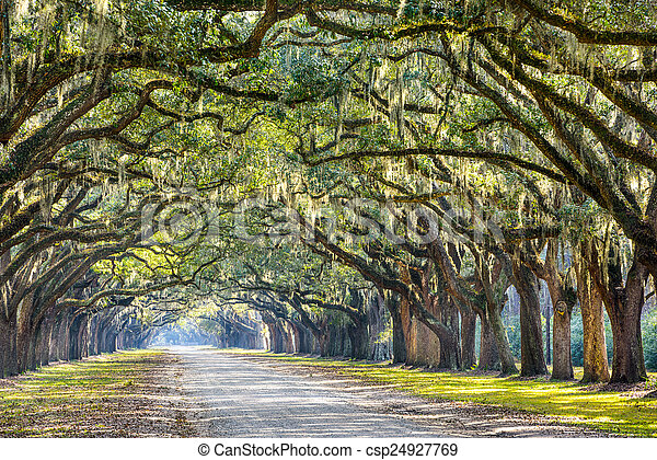 Oak Trees in Savannah - csp24927769