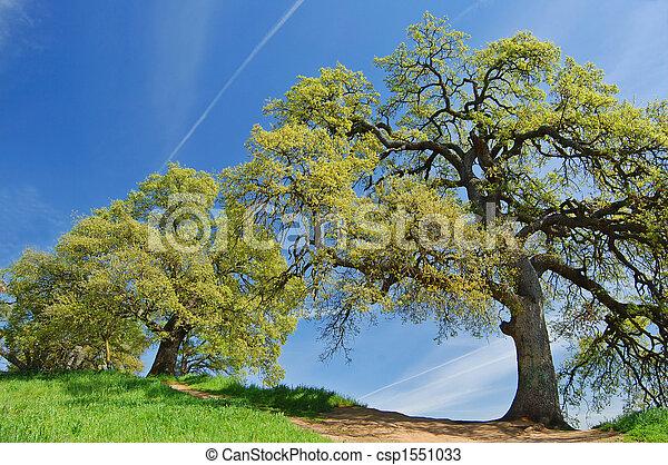 oak trees in spring - csp1551033