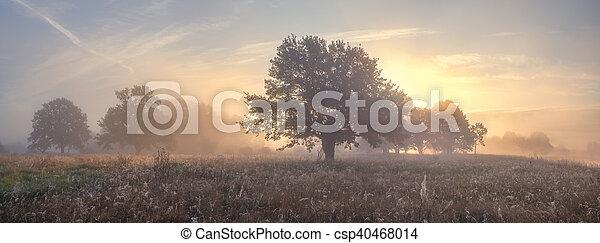 Oak trees on meadow in foggy morning - csp40468014
