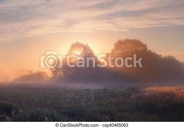 Oak trees on meadow in foggy morning - csp40465063