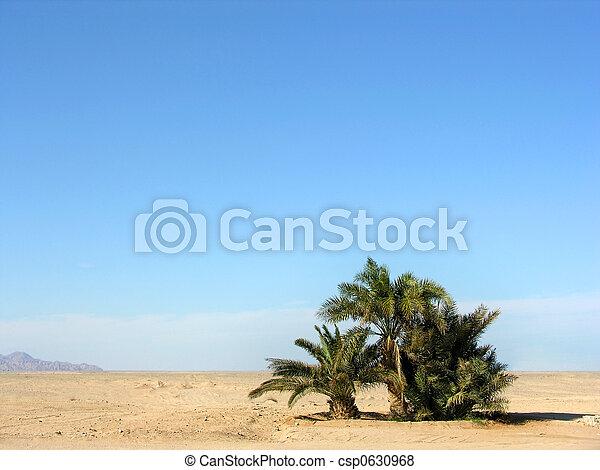 oasis in desert - csp0630968