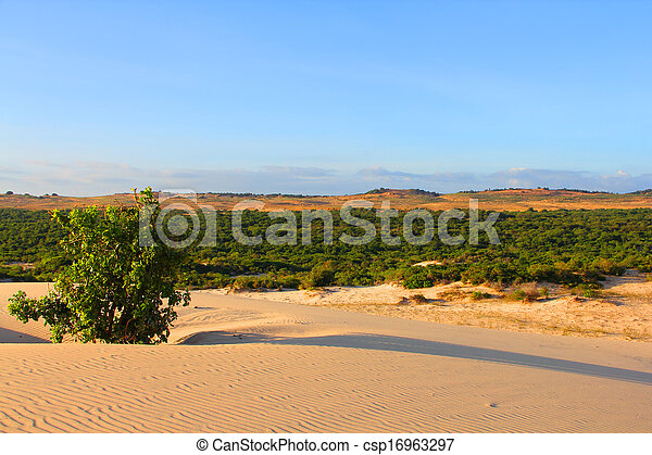 Oasis in desert - csp16963297