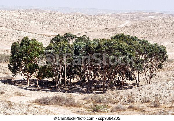 Oasis in the Desert - csp9664205