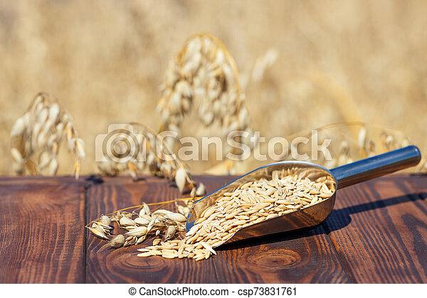 oat grains in scoop - csp73831761