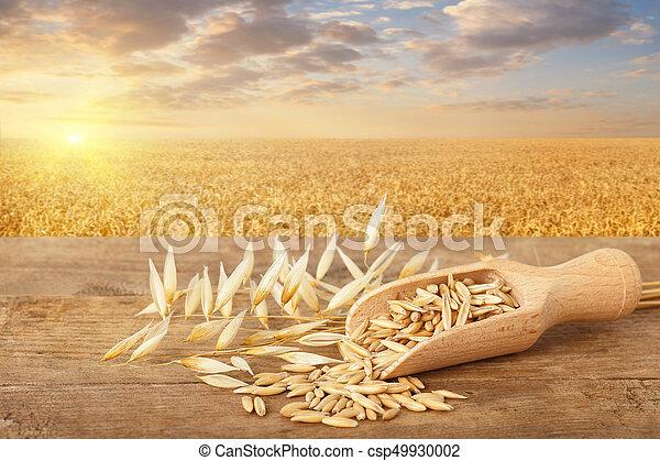 oat grains in scoop - csp49930002