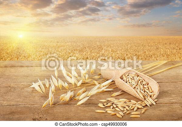 oat grains in scoop - csp49930006