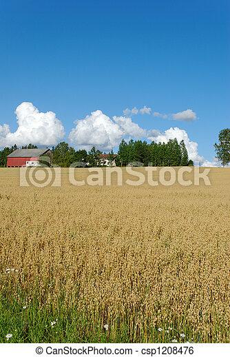 Oats Field and Farm Verti - csp1208476