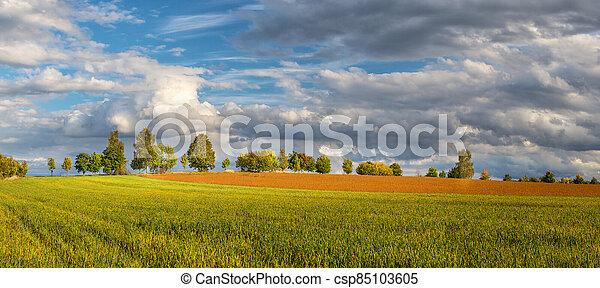obzor, autumn krajina, cesta, bojiště, venkov, -, louka, strom, běloba mračno - csp85103605