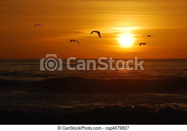 ocaso california - csp4079827