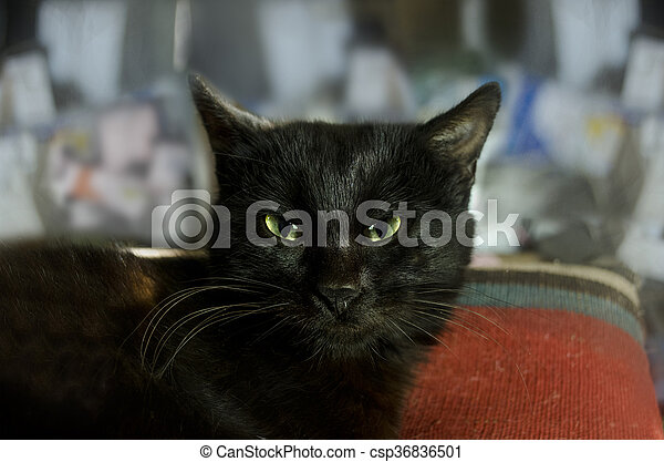 nero micio cacciatore