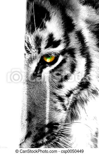 occhio tigre - csp0050449