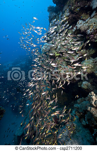ocean and golden sweepers - csp2711200