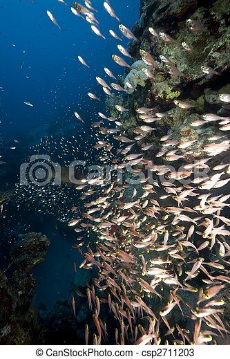 ocean and golden sweepers - csp2711203