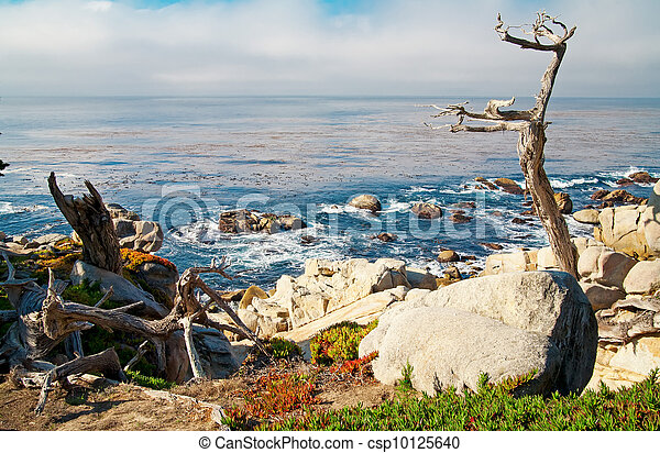 Ocean shore with rocks and trees. Carmel, CA. - csp10125640