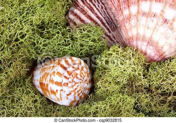 Ocean still life with algae moss - csp9032815