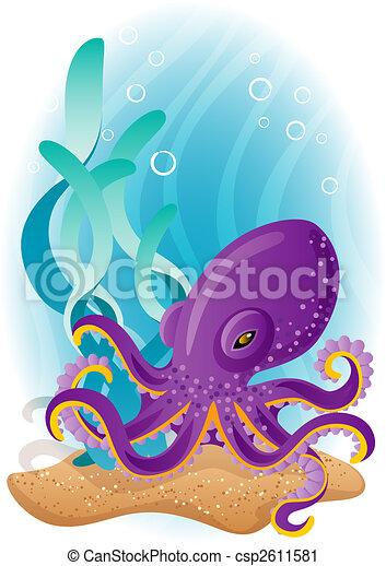 octopus - csp2611581
