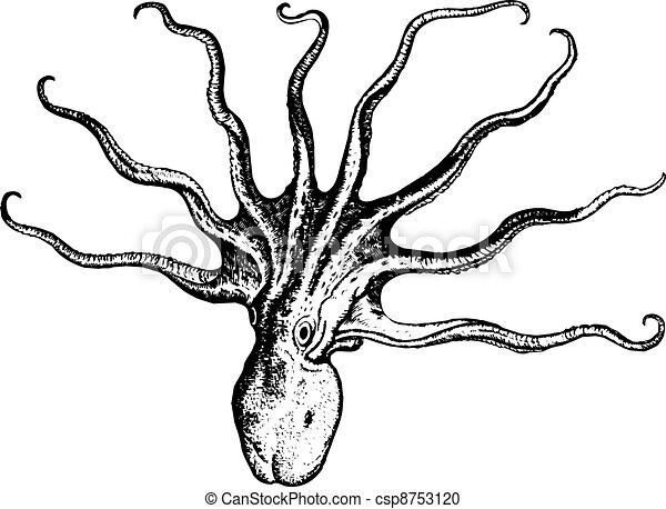 Octopus - csp8753120