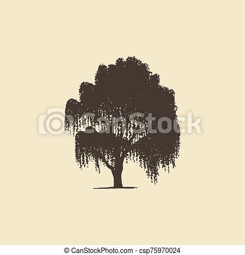 oder, weide, birke, abfallend, hand, vektor, skizze, silhouette., baum., gezeichnet - csp75970024