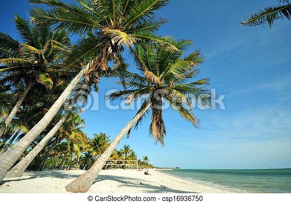 Key West Florida - csp16936750