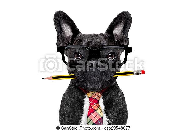 office worker dog - csp29548077
