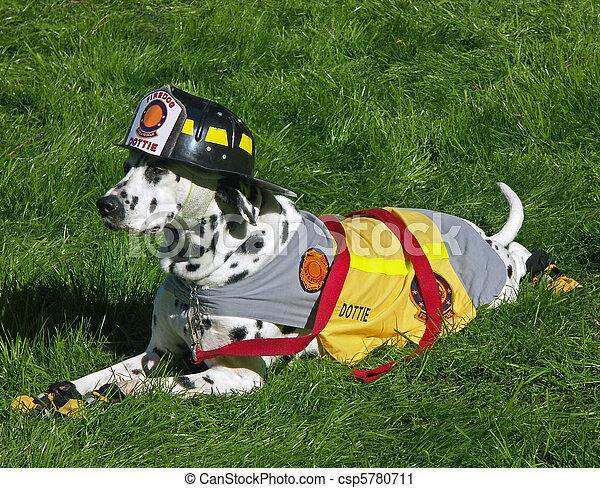 ogień, ubrany, pies, dalmation, wydział, maskotka - csp5780711