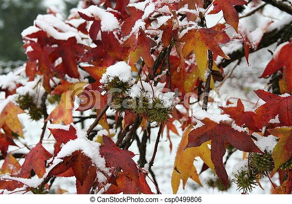 ohhhh, snow! - csp0499806