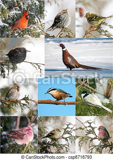oiseau, hiver, collection - csp8718793