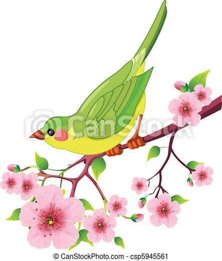 Oiseau Printemps Branch Arbre Fond Mignon Seance Isole Oiseau Fleur Blanc Canstock