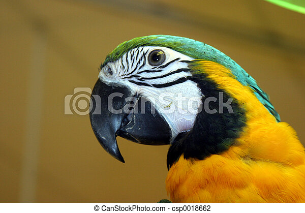 oiseaux, #1 - csp0018662