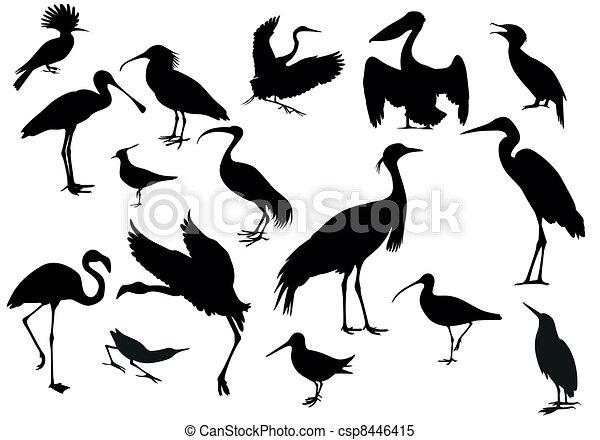 oiseaux - csp8446415